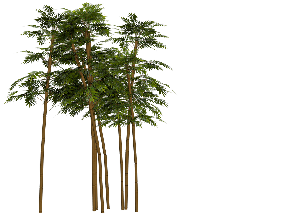 bamboo trees png - photo #8