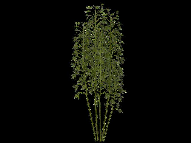 Free Illustration Bamboo Plant Wellness Free Image On