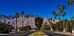 california, palm trees