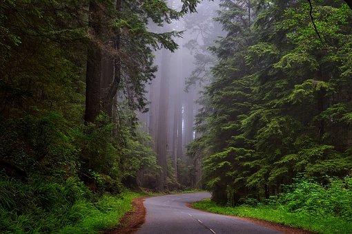 Trees, Fog, Street, Road, Lane, Lush