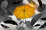 umbrella, yellow, black