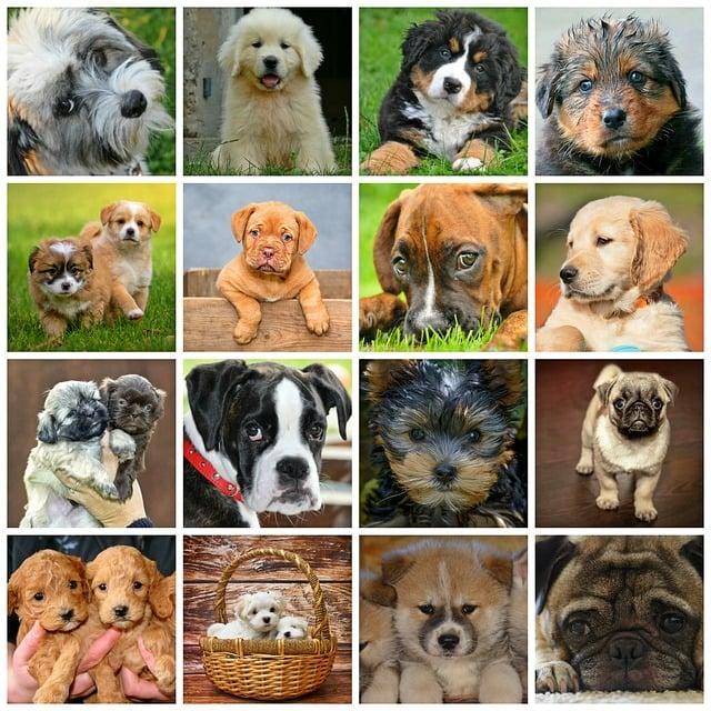 Collage Dogs Animals Dog · Free Image On Pixabay