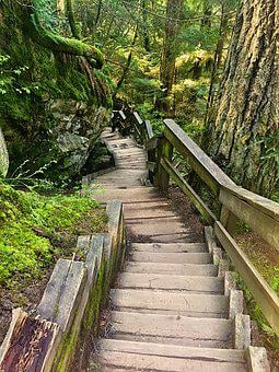 Trees, Nature, Stairs, Zen, Energy