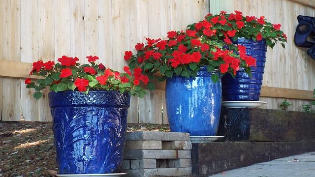 Free photo Geraniums Red Flowers Blue Pots Free