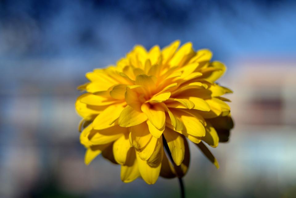 Yellow flower bile free photo on pixabay yellow flower flower bile yellow the petals mightylinksfo