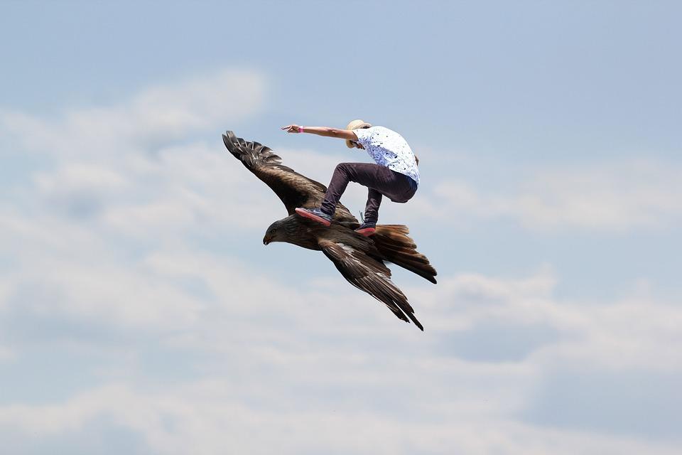 flying eagle cool free photo on pixabay