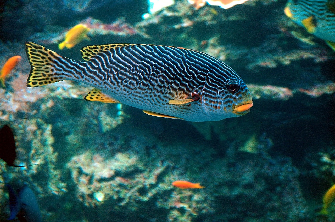 Tropical fish - cafenews info