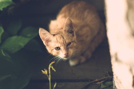 Cat, Eye, Injury, One Eye, Village