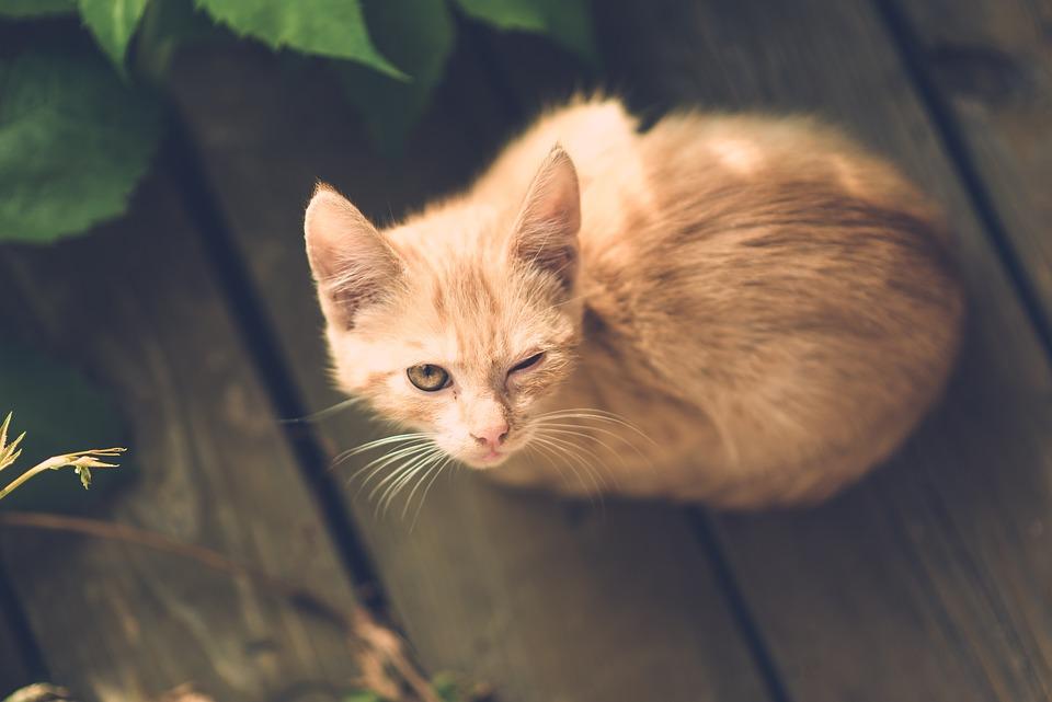 Rainbow Cat Girl