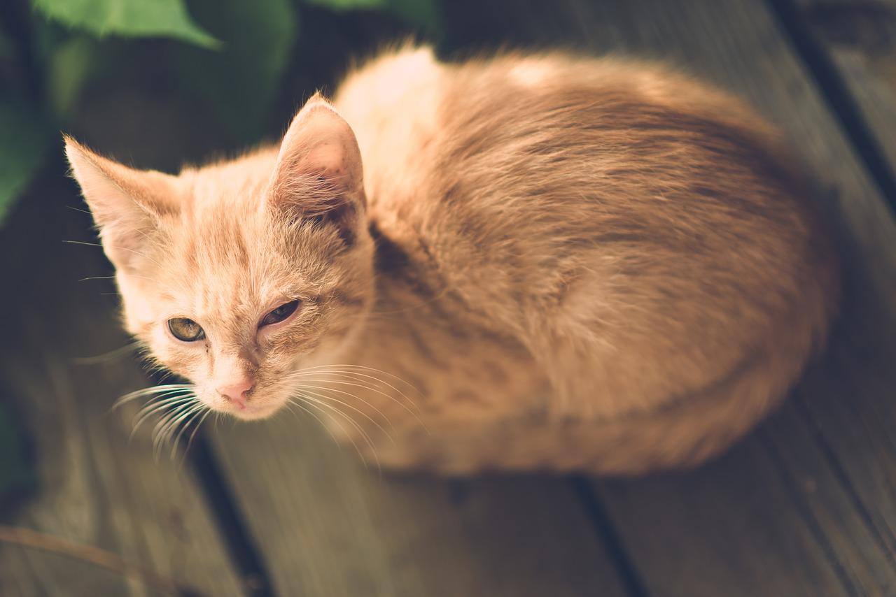products to eliminate cat urine odor