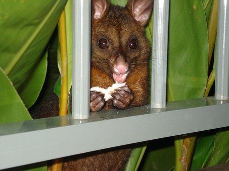 HAbitat of possums