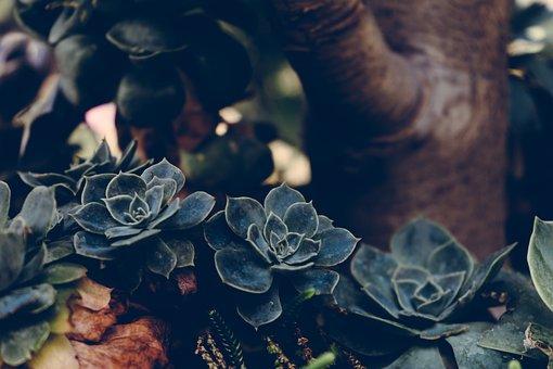Un centre de jardinage devrait-il être mort ?