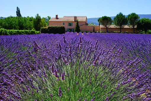 Lavender, Estate, Property