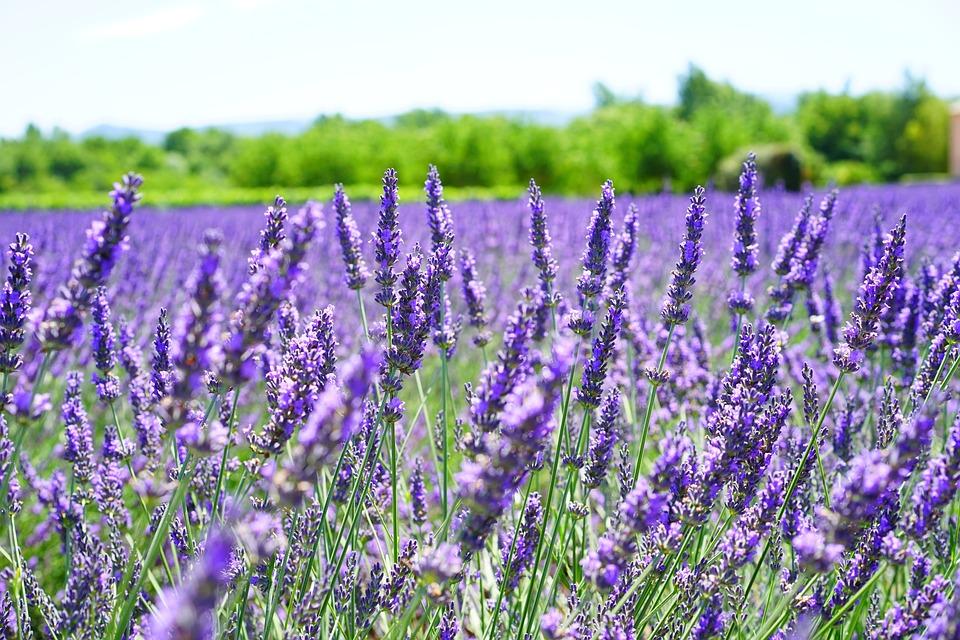 cottage, garden  free images on pixabay, Natural flower