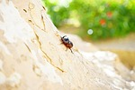rhinoceros beetle, beetle, horn