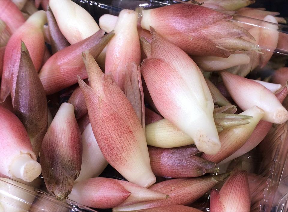 ミョウガの育て方と増やし方・栽培方法や季節別の育て方