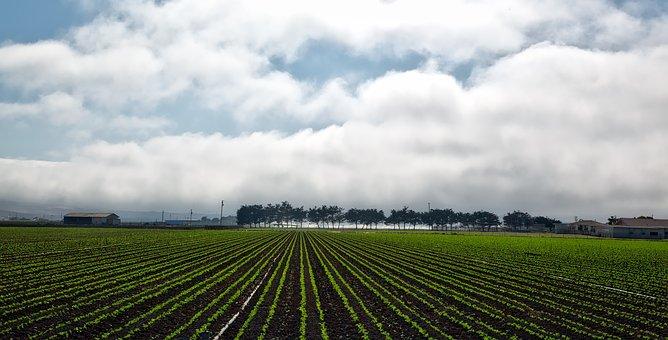 California, Panorama, Farm, Rural, Crop
