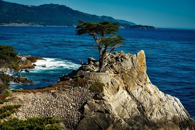 free photo lone isolated cypress tree sea free image
