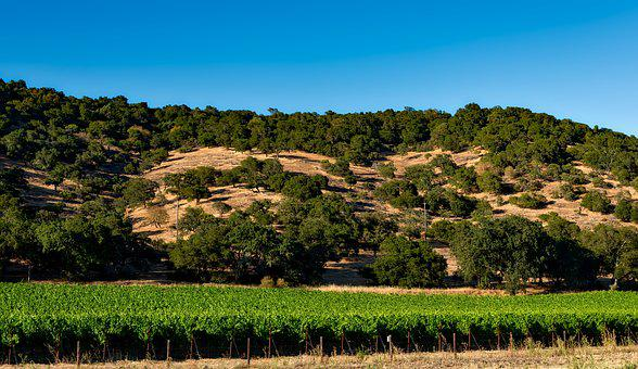 Vineyard, California, Napa Valley