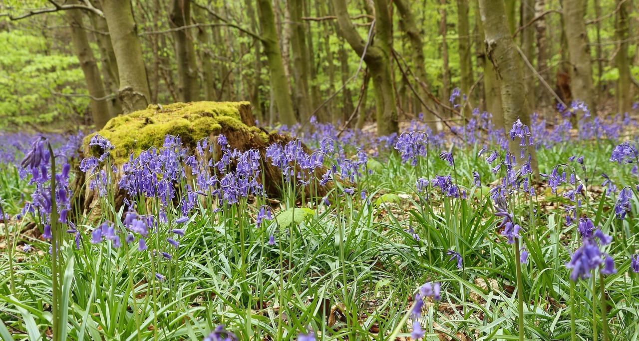 Фото и название цветов растущих в лесу