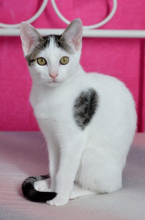 Cat, Pet, Domestic Cat, Cat Portrait, Mieze, Kitten
