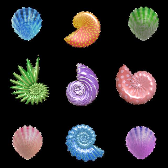 free illustration shell  seashell  nautilus  clam free free clipart summer school free clipart summer bbq border