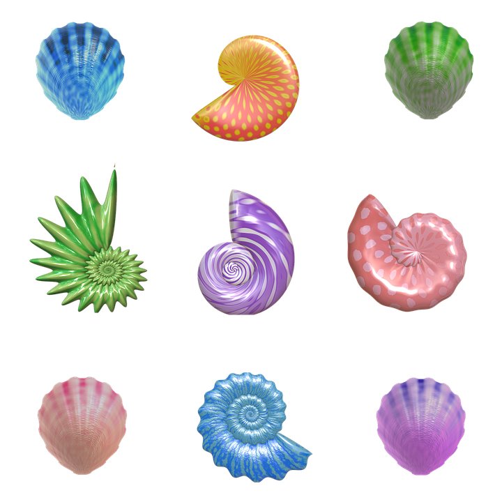 Free Illustration Shell Seashell Nautilus Clam Free