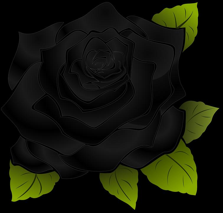 Rosa Flower Black Free Vector Graphic On Pixabay
