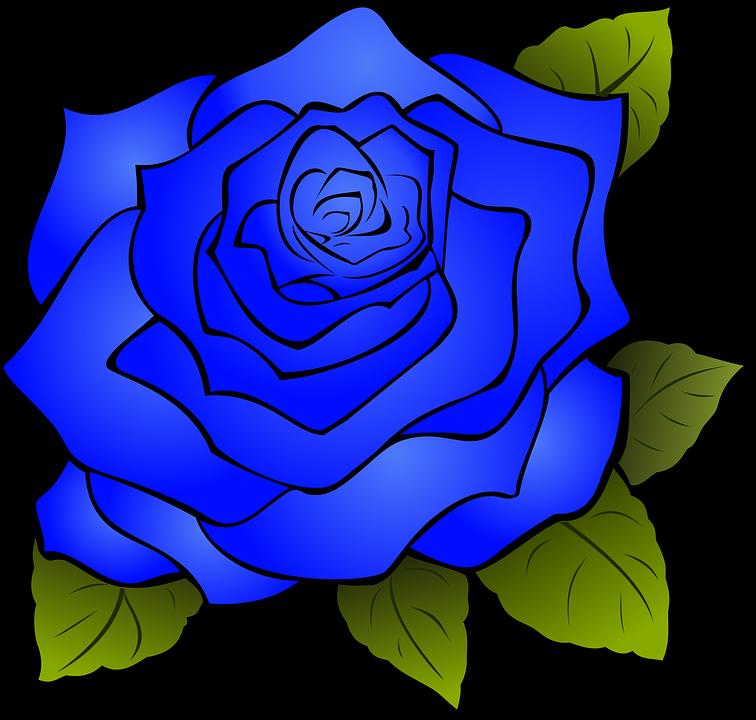 Rosa Bunga Biru Mawar Gambar Vektor Gratis Di Pixabay