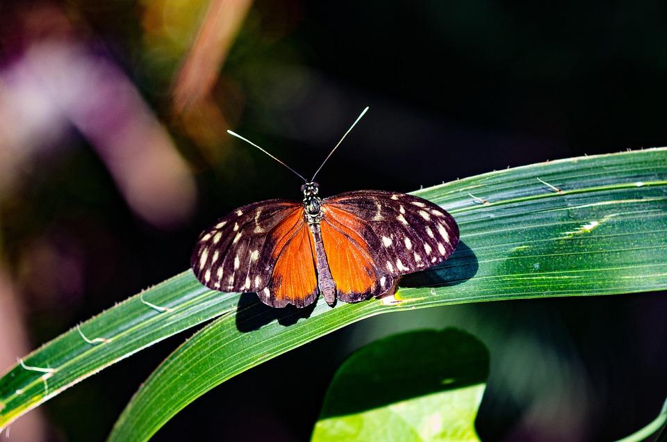 蝴蝶, 昆虫, 多彩, 自然, 动物, 森林, 绿色, 生物多样性, 可爱, 翠凤