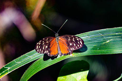 Biologische Bilder · Pixabay · Kostenlose Bilder herunterladen
