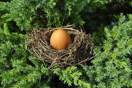 Egg, Socket, Full, Busy, Bird'S Nest