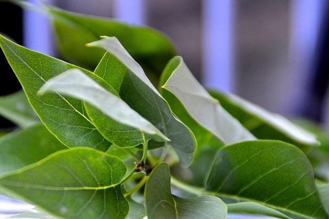 Kostenloses Foto Efeu, Blätter, Grün, Gewächs, Natur