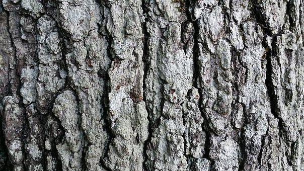 Tree, Bark, Fall, Woods, Nature, Forest