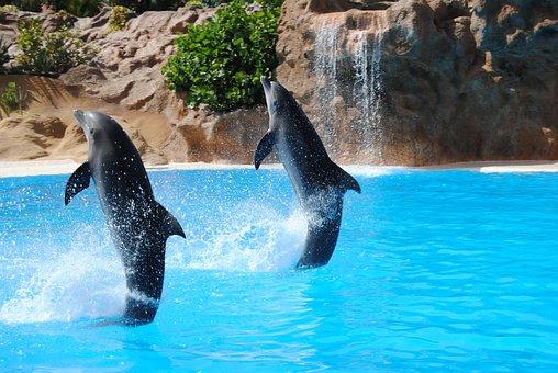 Delfines saltando im genes gratis en pixabay - Images dauphins a imprimer ...