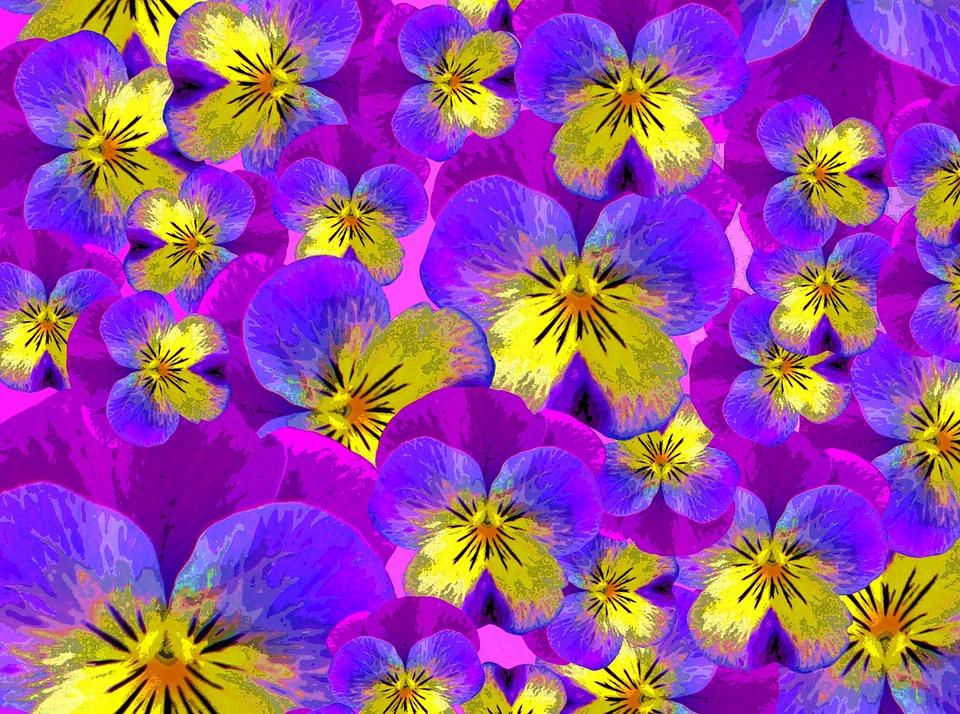 Violette Dessin Fleur Image Gratuite Sur Pixabay