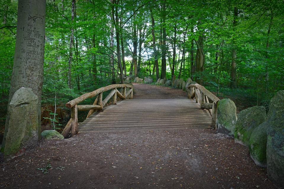 Photo gratuite: Pont, Forest, Chemin Forestier - Image ...
