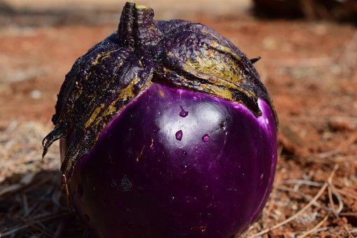 100+ Free Solanum & Eggplant Photos - Pixabay
