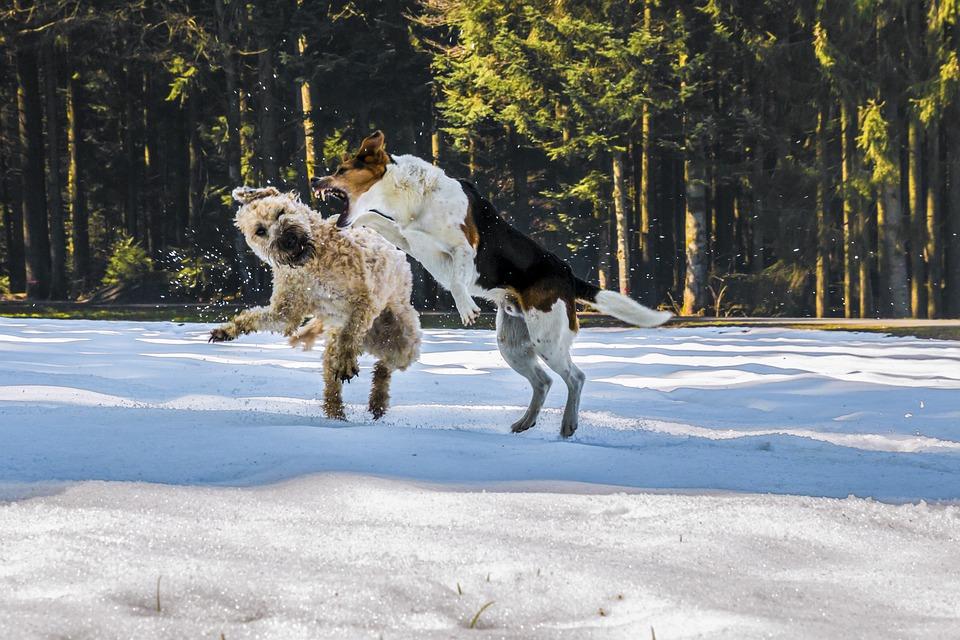 Cani, Lotta, Ascolta, Neve, Carta Da Parati