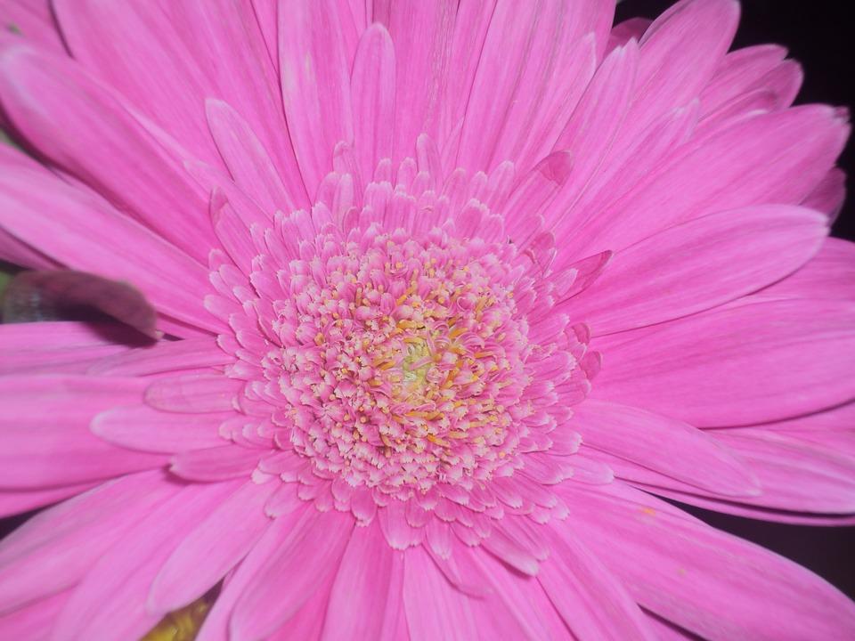 Flor Rosa Flores Rosas Foto Gratis En Pixabay