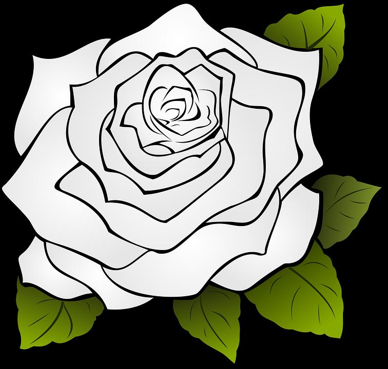 Mawar Gambar Vektor Unduh Gambar Gratis Pixabay