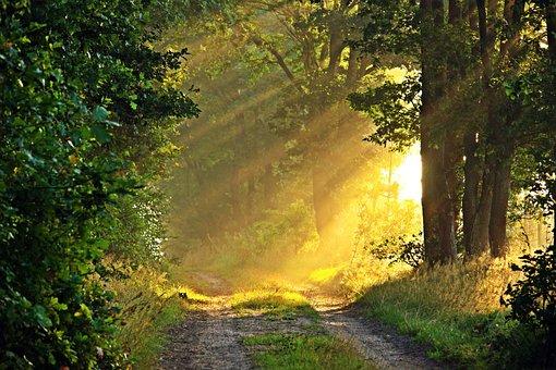 3000 Free Morning Sun Morning Images Pixabay
