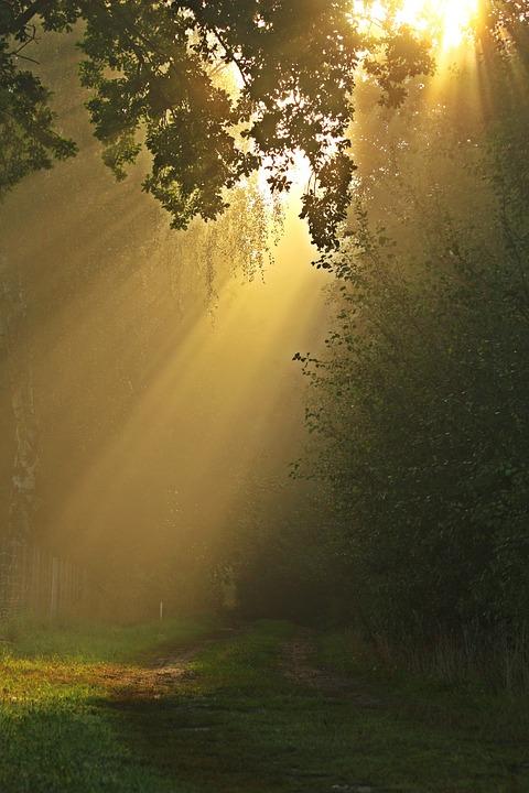 Kostenloses Foto: Weg, Nebel, Bäume, Wald, Stimmung ... | 480 x 720 jpeg 107kB