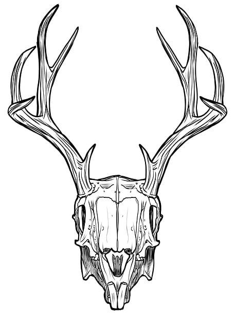 gratis illustratie schedel hoorns gewei konijn