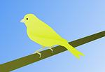 canary, bird
