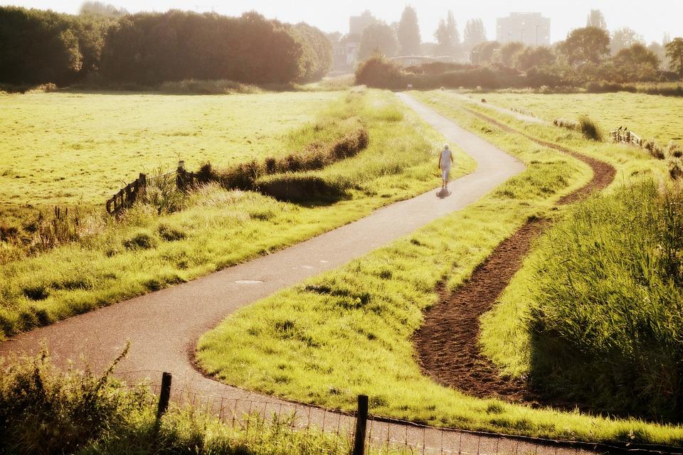 holland landscape dutch free photo on pixabay