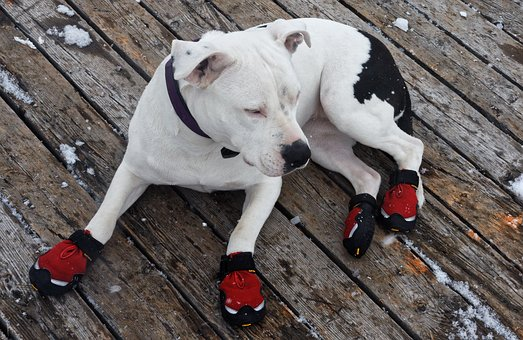 The Best Dog Boots to Buy for All Seasons and Terrain