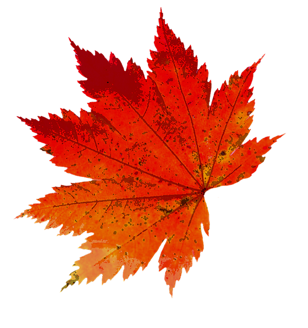 Free Illustration: Autumn, Leaves, Color, Nature