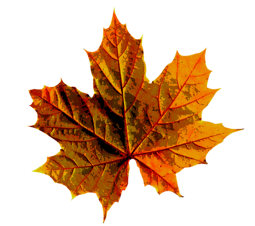 Autumn Leaves Color · Free image on Pixabay