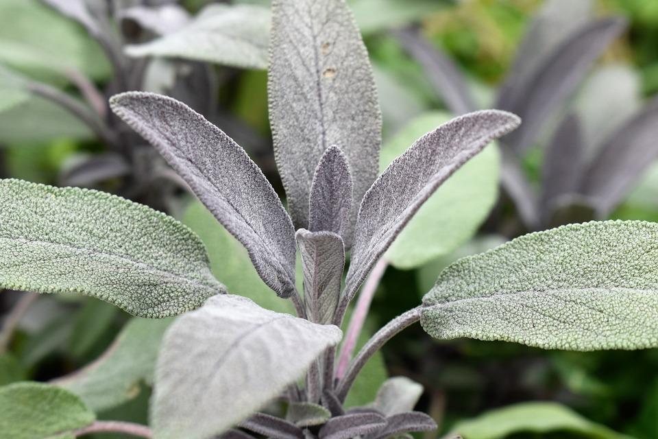 Sabio Planta De Plantas - Foto gratis en Pixabay